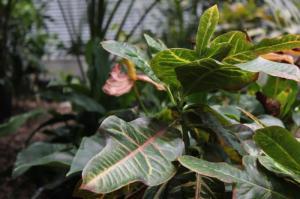 micro plants2